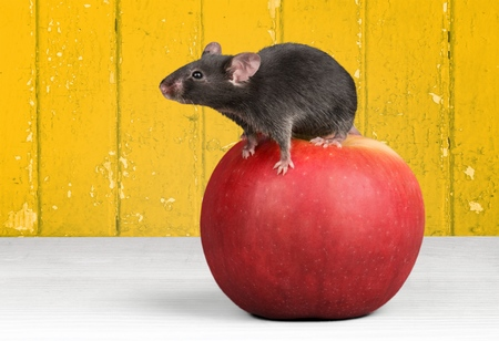 food products: Mouse.