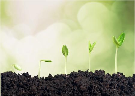 crecimiento planta: Crecer. Foto de archivo