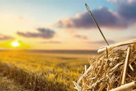 sewing needle: Needle in a Haystack.
