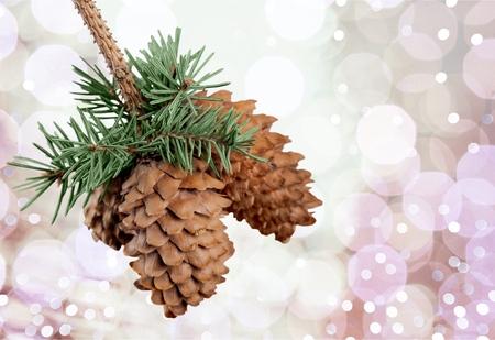 pomme de pin: Cone Pine.