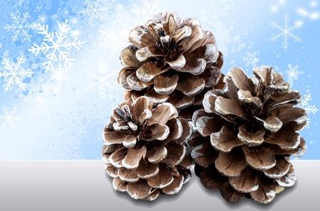 pine cone: Pine Cone. Stock Photo
