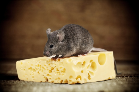 mouse: Mouse.