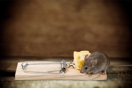 obsessive: Mousetrap.