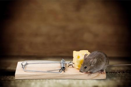 mousetrap: Mousetrap.