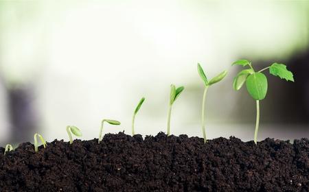 lapse: Growing.