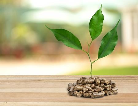 biomasa: Pellets de biomasa.