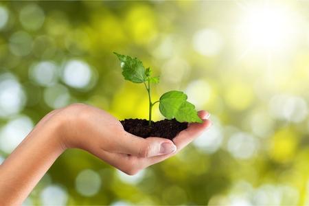 medio ambiente: Cuidado del Medio Ambiente. Foto de archivo