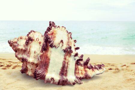 shell: Shell.