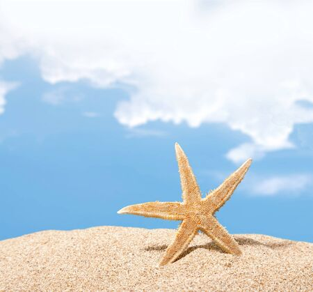 winter escape: Beach starfish. Stock Photo