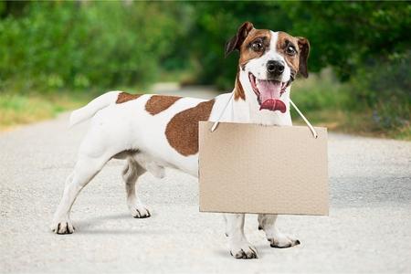 perros graciosos: Perro.