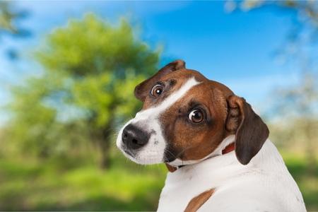 dog isolated: Dog.