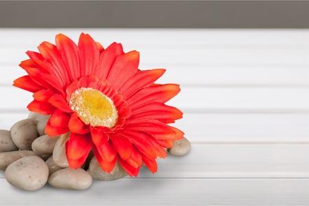 lastone therapy: Flower.