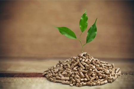 biomasa: La biomasa. Foto de archivo