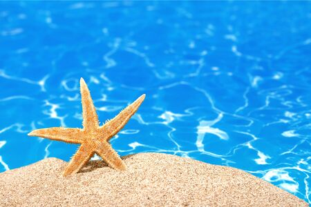 sunshine background: Beach starfish. Stock Photo