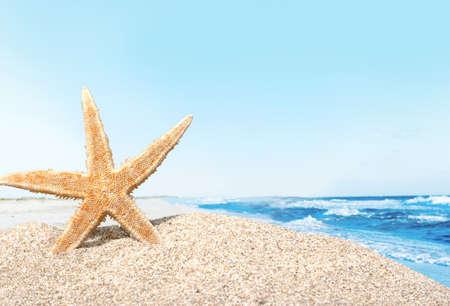 winter escape: Beach starfish. Stock Photo