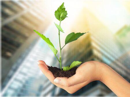 recovery: Organic. Stock Photo