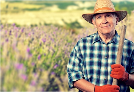 elderly adults: Gardening. Stock Photo