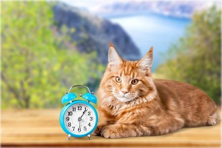baby  pussy: Clock.
