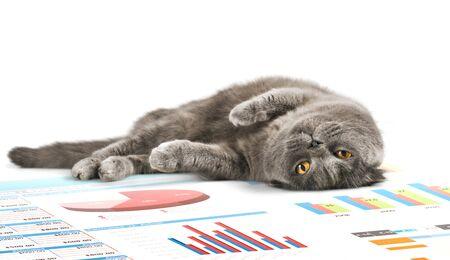 grey rug: Cat.