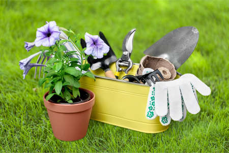 Potted plants: Gardening. Stock Photo