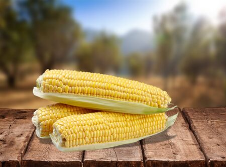 cereal plant: Corn.