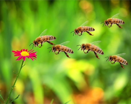 bee swarm: Bee.