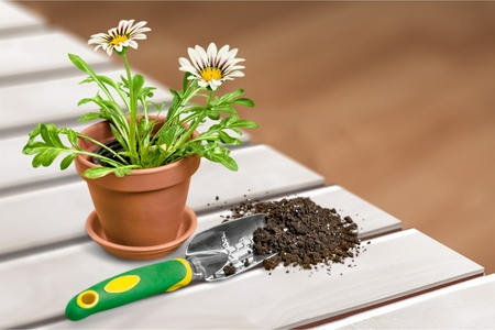 shovel in dirt: Gardening. Stock Photo
