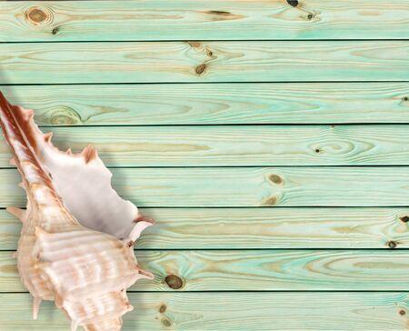 echinoderm: Shell.