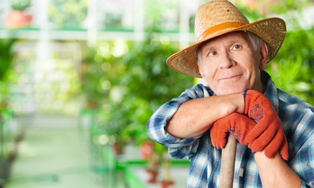 old people: Gardening. Stock Photo