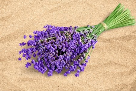 lavender: Lavender. Stock Photo