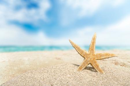 beach animals: Beach.