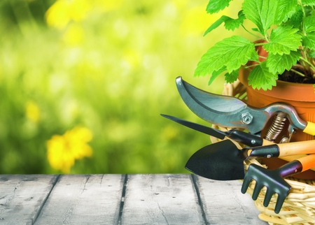 replanting: Gardening. Stock Photo