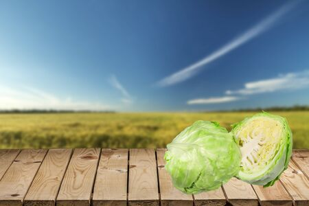 bisected: Cabbage. Stock Photo