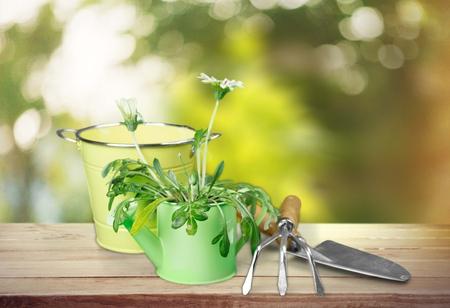 flower pot: Gardening Equipment. Stock Photo