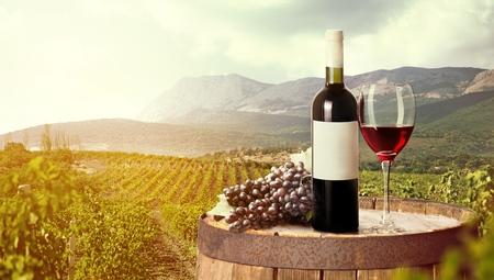 vineyard at sunset: Wine. Stock Photo
