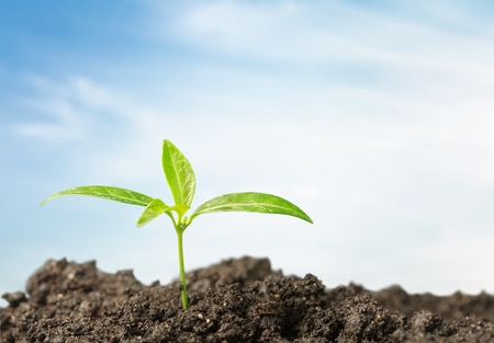 soil conservation: Growth.