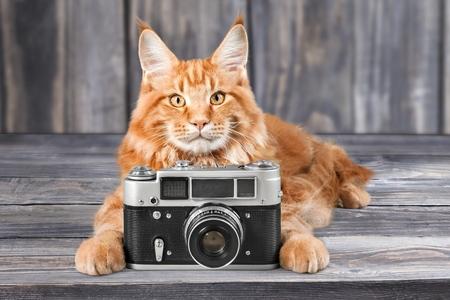 photography: Cat.