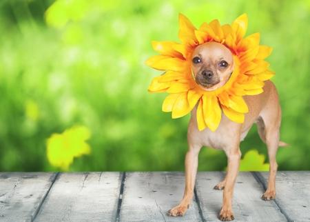 dressing up costume: Dog.