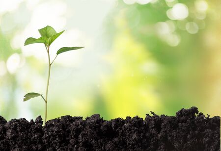 plant growth: Seedling. Stock Photo