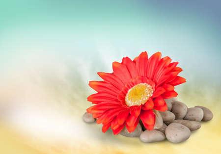 spa flower: Flower.
