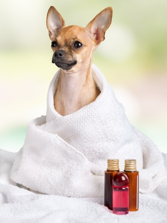 pampered pets: Animal.