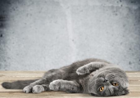 oriental rug: Cat.