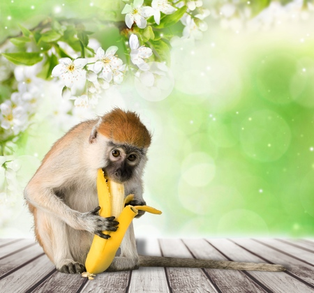 comiendo platano: Mono.