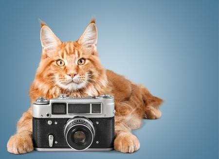 photo: Photo.