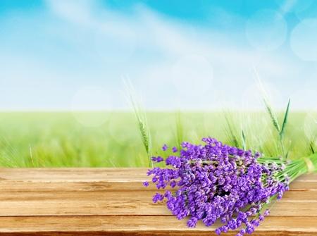 flores moradas: Lavanda. Foto de archivo