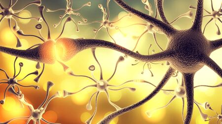 dendrite: Nerve Cell. Stock Photo