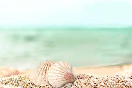 seashell: Seashell.