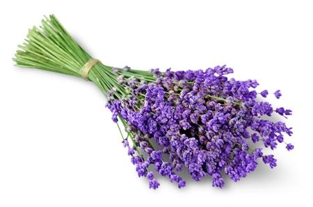 bouquet: Lavender. Stock Photo