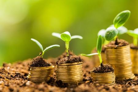 pieniądze: Wzrostu. Zdjęcie Seryjne