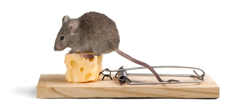 mouse trap: Risk.